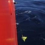 Tin tức trong ngày - Vụ MH370: Bắt đầu cuộc đua dưới lòng đại dương