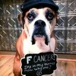 Phi thường - kỳ quặc - Bộ ảnh cảm động của chú chó bị ung thư