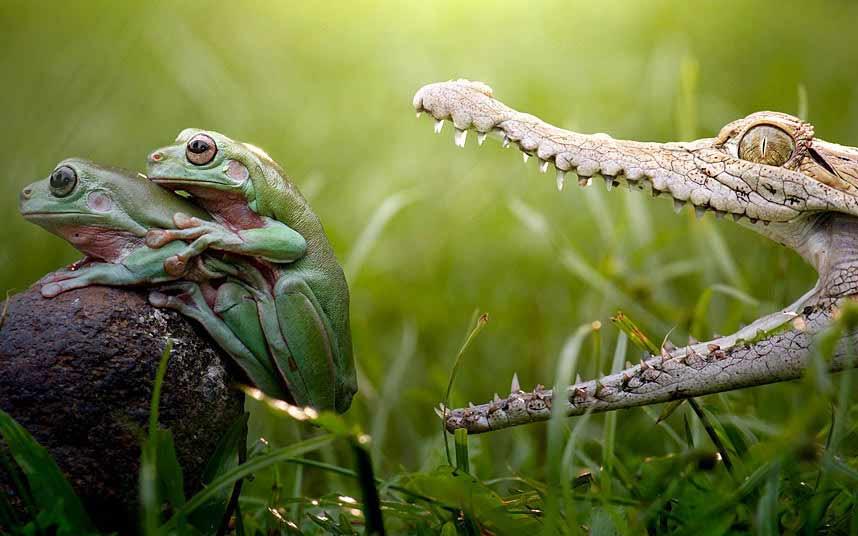 Ảnh đẹp: Đại bàng không chiến giành thức ăn - 1
