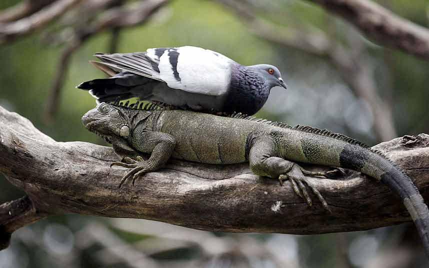 Ảnh đẹp: Đại bàng không chiến giành thức ăn - 10