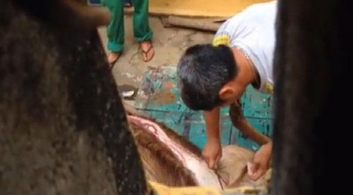 Lộ clip bảo vệ, nhân viên xẻ thịt nai ngay vườn thú - 2