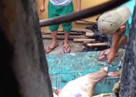 Xử lý nhân viên vườn thú làm thịt nai chia nhau - 1