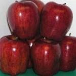 Tin tức trong ngày - Một người tử vong nghi do ăn táo có thuốc diệt cỏ