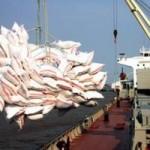 Thị trường - Tiêu dùng - Xuất khẩu gạo gặp khó