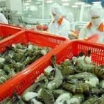 Thị trường - Tiêu dùng - Nguy cơ tạm ngưng xuất khẩu tôm vào Nhật