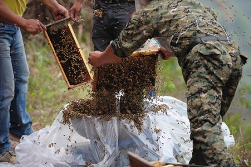 TQ: Dị nhân để 45 kg ong bâu kín người - 2