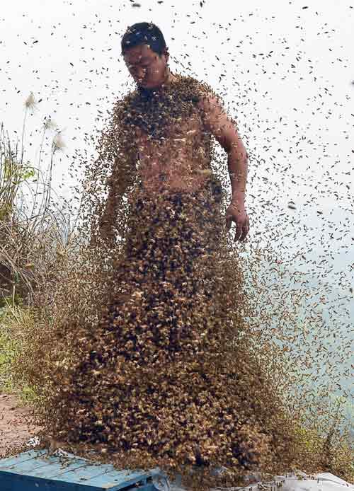 TQ: Dị nhân để 45 kg ong bâu kín người - 3
