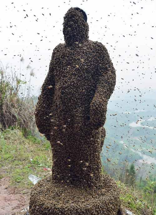 TQ: Dị nhân để 45 kg ong bâu kín người - 7