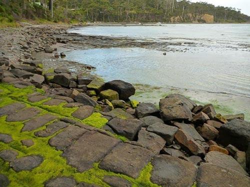 Vỉa hè lát đá ngoạn mục ở hòn đảo Tasmania, Úc - 3