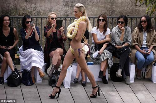 Người mẫu bikini bế trăn bạch tạng lên sàn diễn - 3