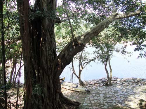 Thiên nhiên kì ảo trên dòng sông Hầm Hô, Bình Định - 5
