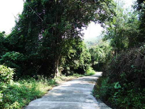Thiên nhiên kì ảo trên dòng sông Hầm Hô, Bình Định - 3