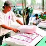 Thị trường - Tiêu dùng - Thái Lan bán gạo rẻ nhất TG: Xuất khẩu gạo VN tắc ở mọi thị trường