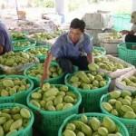 Thị trường - Tiêu dùng - Tìm đường cho nông sản vào Nhật