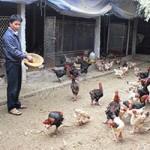 Bạn trẻ - Cuộc sống - Người đàn ông triệu phú nuôi gà Đông Tảo
