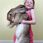 """Phi thường - kỳ quặc - Thỏ """"khổng lồ"""" nặng 22kg"""