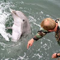 Mỹ sắp triển khai cá heo chiến đấu tại Biển Đen