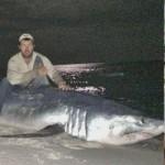 Phi thường - kỳ quặc - Tay không săn cá mập gần 400kg
