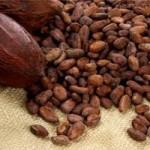 Thị trường - Tiêu dùng - Việt Nam sẽ đứng đầu thế giới về xuất khẩu chocolate