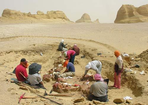 Viếng thung lũng cá voi hóa thạch ở Ai Cập - 7
