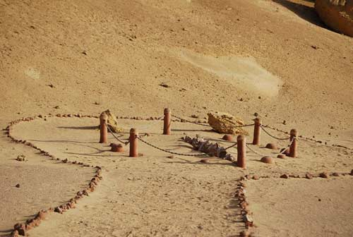 Viếng thung lũng cá voi hóa thạch ở Ai Cập - 1