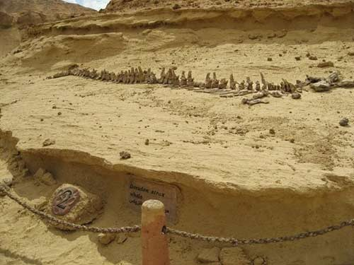 Viếng thung lũng cá voi hóa thạch ở Ai Cập - 3