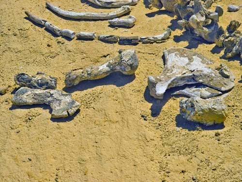 Viếng thung lũng cá voi hóa thạch ở Ai Cập - 5