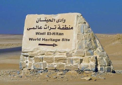 Viếng thung lũng cá voi hóa thạch ở Ai Cập - 8