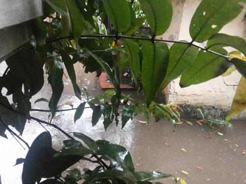 Ảnh Hà Nội ngập lụt tràn lên cả mạng xã hội - 2