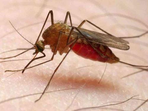 10 đại dịch nguy hiểm giết chết hàng chục triệu người - 4