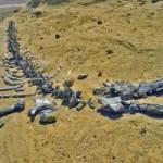 Du lịch - Viếng thung lũng cá voi hóa thạch ở Ai Cập