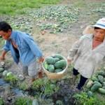Thị trường - Tiêu dùng - Hàng loạt đặc sản nông nghiệp bị mất giá