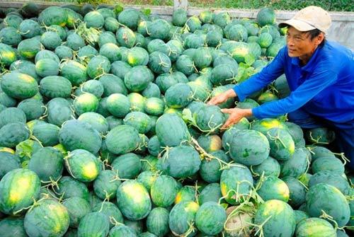 Khi nào nông sản Việt hết cảnh được mùa mất giá? - 1