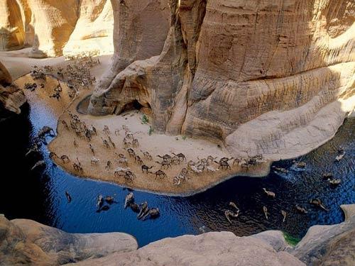 """""""Khách sạn"""" của lạc đà giữa sa mạc Sahara - 1"""