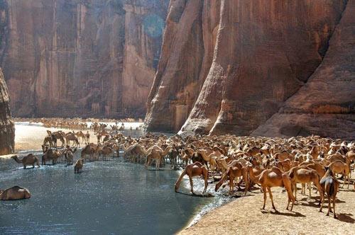 """""""Khách sạn"""" của lạc đà giữa sa mạc Sahara - 7"""