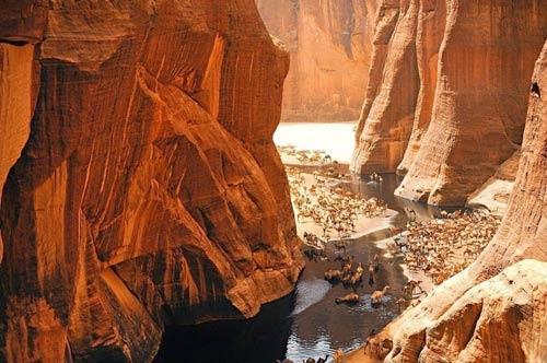 """""""Khách sạn"""" của lạc đà giữa sa mạc Sahara - 3"""
