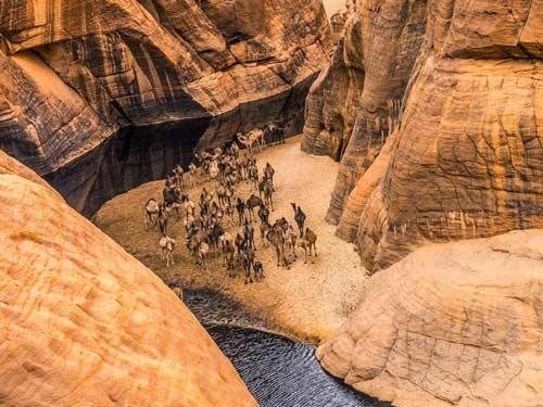 """""""Khách sạn"""" của lạc đà giữa sa mạc Sahara - 4"""