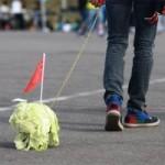 Tin tức trong ngày - Thanh niên Trung Quốc rộ mốt dắt bắp cải đi dạo