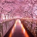 """Du lịch - """"No mắt"""" ngắm những đường hầm cây đẹp nhất hành tinh"""