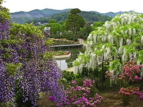 Thiên đường hoa tình ái Nhật Bản - 1