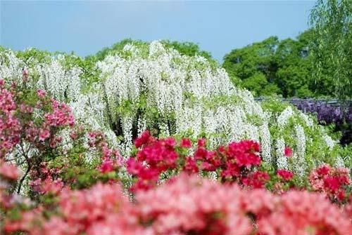 Thiên đường hoa tình ái Nhật Bản - 3
