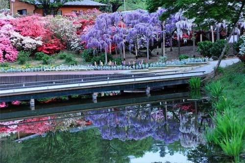 Thiên đường hoa tình ái Nhật Bản - 4