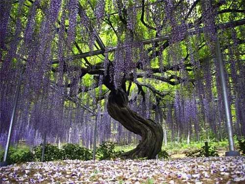 Thiên đường hoa tình ái Nhật Bản - 6
