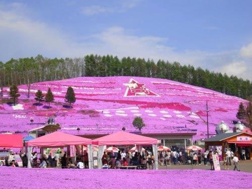 Đắm chìm trong thiên đường hoa Chi Anh ở Nhật Bản - 3