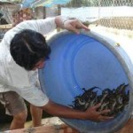 Thị trường - Tiêu dùng - Nghề nuôi cá sấu: Tăng giá, vừa mừng vừa lo
