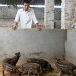 Bạn trẻ - Cuộc sống - Chàng trai triệu phú nuôi lợn rừng, chim trĩ đỏ