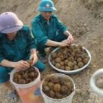 """Tin tức trong ngày - Phát hiện quả bom bi """"khủng"""" ở Nghệ An"""