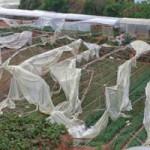 Tin tức trong ngày - Lốc xoáy tàn phá vùng rau, hoa Đà Lạt