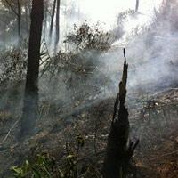Cháy rừng thông, 2 người nhập viện cấp cứu