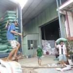 Thị trường - Tiêu dùng - Xuất khẩu gạo bị Thái giành giật thị trường